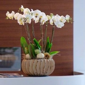Orchideen Arrangement
